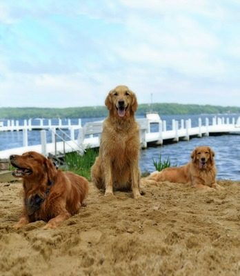 Buddy, Packer, Maya