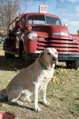 A friendly pup stands guard at the winery. Guests, however, are reminded to please leave your four-legged family members at home on your next trip to the orchard!