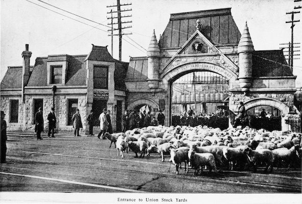 Entrance to Union Stock Yards with sheep being herded through gate, Chicago, Illinois, 1902. Published in Harper's Weekly.