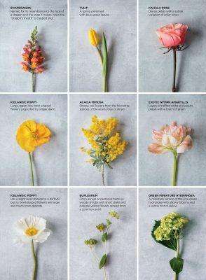 55_FloralFeature(1)