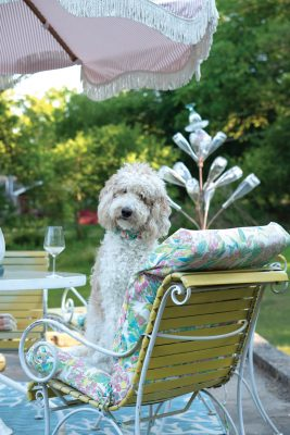 Pearl, 2-year-old Goldendoodle